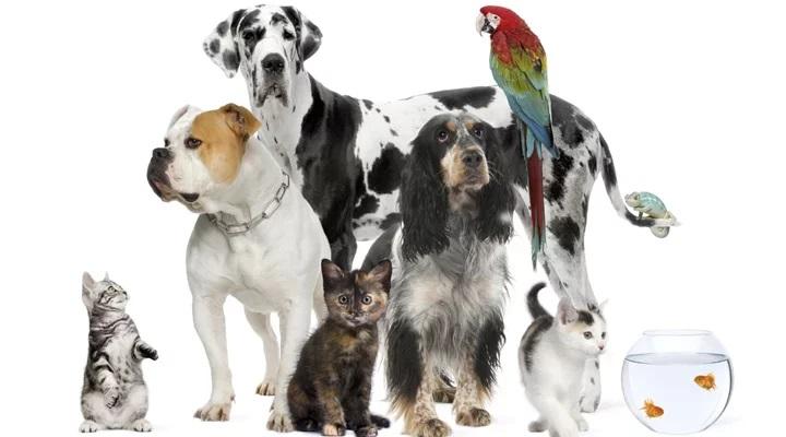 Crimes contra animais aumentam. Saiba como identificar e denunciar maus-tratos e abusos.